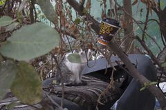 Cat in a dump 2 royalty free stock photography