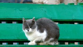 Street cat sitting on a bench in outside cold stock video