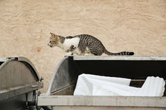 Street cat sitting on a bin Royalty Free Stock Images
