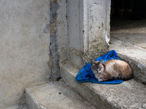 Street cat sitting on blue sack, cement Royalty Free Stock Images