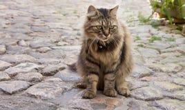 Street cat Stock Photography