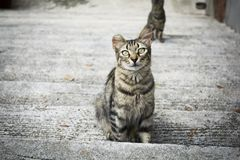 Street cat sitting in the stairwell royalty free stock image