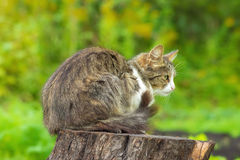 Street cat sitting on a tree stump Stock Image
