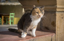 Street cat sitting and watching. Green table and chairs on the background Royalty Free Stock Image