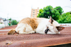 Street cat sleep on roof in thailand Royalty Free Stock Photos