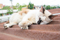 Street cat sleep on roof in thailand Stock Photos