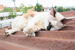 Street cat sleep on roof in thailand Stock Photos