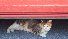 Street cat sleep under car Royalty Free Stock Photo