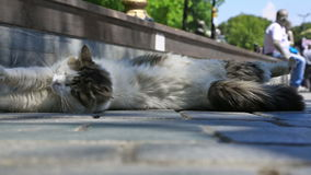 Street cat squinting in the sun stock footage