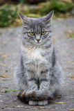 Street cat sullenly looks into the camera. Stock Photos