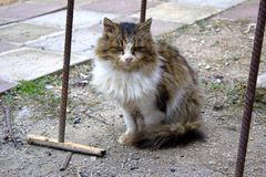 A hungry cat is waiting for him to be fed while sitting on the asphalt on the street. Street cat survives on the street. A hungry cat is waiting for him to be royalty free stock image