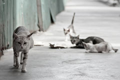 Street cat in Thai temple. I take this picture by my Canon 60D in Thai temple betwin my holiday Royalty Free Stock Photo