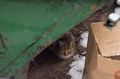 Street cat in the trash stock images