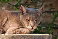 Street cat on a wall Stock Images