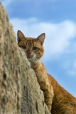 Street cat on a wall Royalty Free Stock Photography