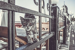 Street cat. The wilde cat on the table in one of street cafe.Yalta stock photo