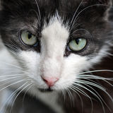 Street cat, wool black and white, long white mustache, green eyes. Stock Photos