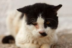 Street cat with a wounded eye. Black and white street cat with a wounded eye Stock Image