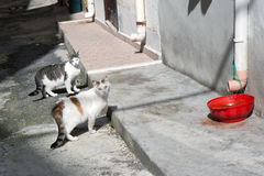 Street cats Stock Image