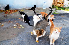 Street Cats. Just a few street cats looking for the food stock photo