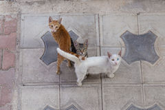 Street Cats Royalty Free Stock Photos