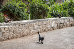 Street cats in the garden Royalty Free Stock Image