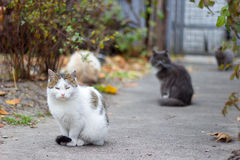 Street cats. Homeless cats on the street Stock Photo