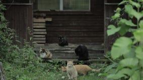 Street cats stock footage