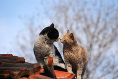 Street cats in love. On tile roof in autumn Stock Photography