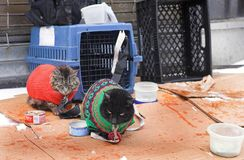 Street cats in New York Royalty Free Stock Images