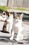 Street cats Royalty Free Stock Photography