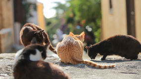 Street cats Stock Images