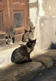 Street Cats Royalty Free Stock Images