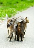 Street cats Royalty Free Stock Photography