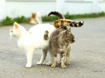 Street cats. With their tails entwined Royalty Free Stock Images
