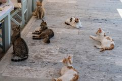 Street cats waiting for some food on the pavmente near a restaurant royalty free stock photos