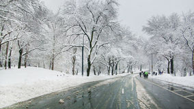 Street in Central Park Royalty Free Stock Photo