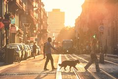 Street in the city center of Bordeaux, France. BORDEAUX, FRANCE- October 2, 2018 : Street photography, soft focus on the man take a walk with dogs during the stock photo