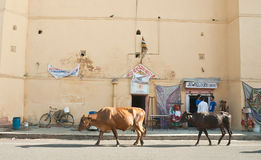Street in the city of Jaipur. Rajasthan, India Royalty Free Stock Photography