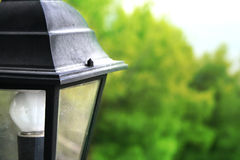 Street city lamp Stock Photography