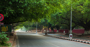 Street covered with trees. Royalty Free Stock Images