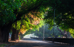 Street covered with trees. Stock Photos