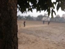 Street Cricket. Details of a tree bark, with blurred background of kid playing street cricket. Taken with Android smartphone Sony Xperia Z2 royalty free stock images