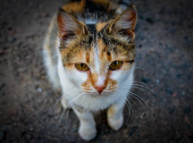Street cute cat. Street cute small cat walking on the street stock photography