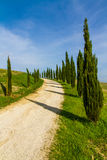 Street Among Cypresses in Tuscany-Val dOrcia,Italy Stock Image