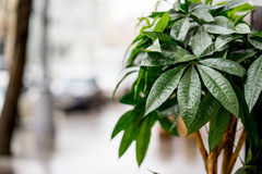 The street decorated with green bush. Photo with blurred background, soft focus. After rain Stock Images