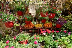 The street decoration with flowers and fruits. In Mdina, Malta Royalty Free Stock Images