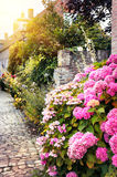 Street decoration with pink hortensias Stock Photo