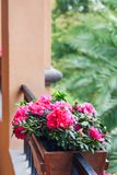 Street decoration with plants and flower,Potted flowers of pink azalea on the wooden  balustrade with green palm trees background. Fuzhou,China royalty free stock photo