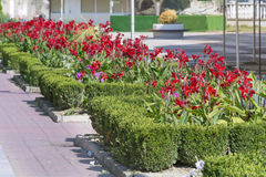Street decorative red  irises flowers in Sofia,Bulgaria Stock Photos